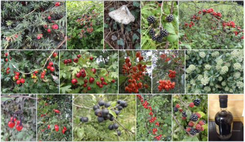 Montage: Autumn Berries