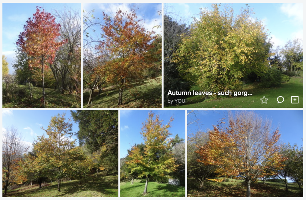 Montage: Forty Acres Autumn Colours