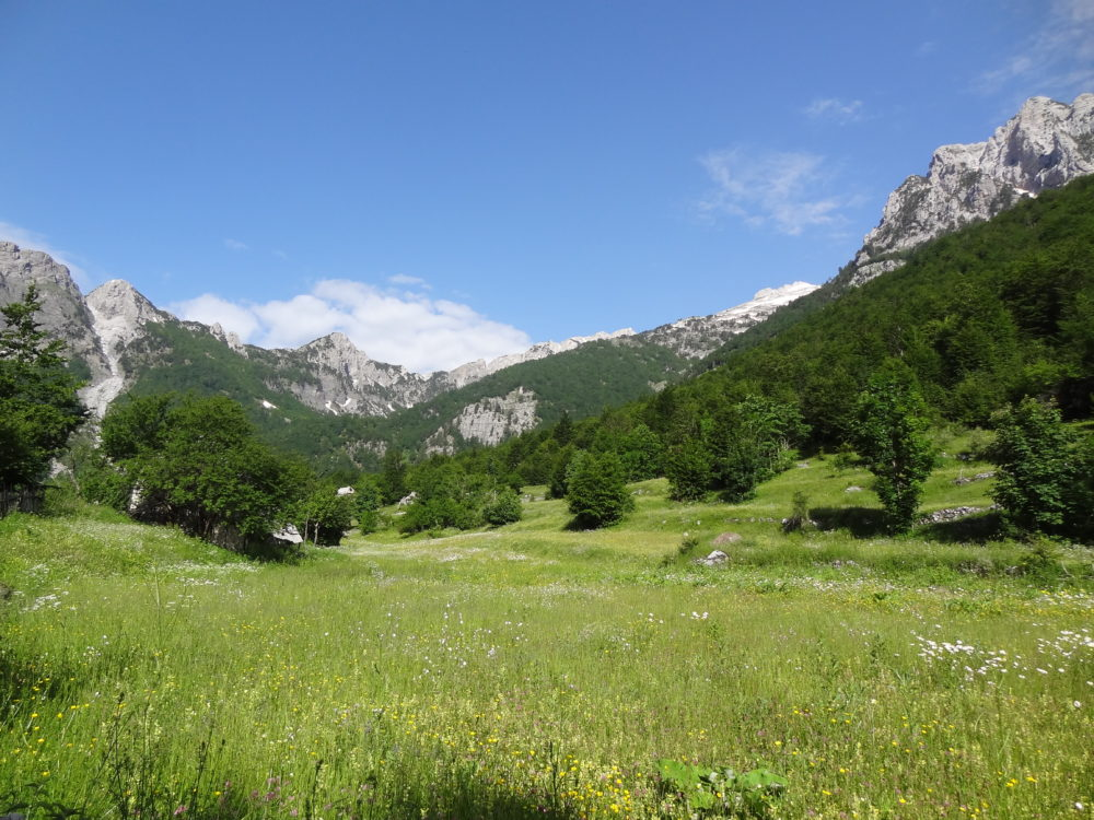 Wildflower meadow, and the Accursed Mountains (Prokletije / Albanian Alps) above. En route to Qafa e Valbonës / Valbona Pass, Albania (June 2018)