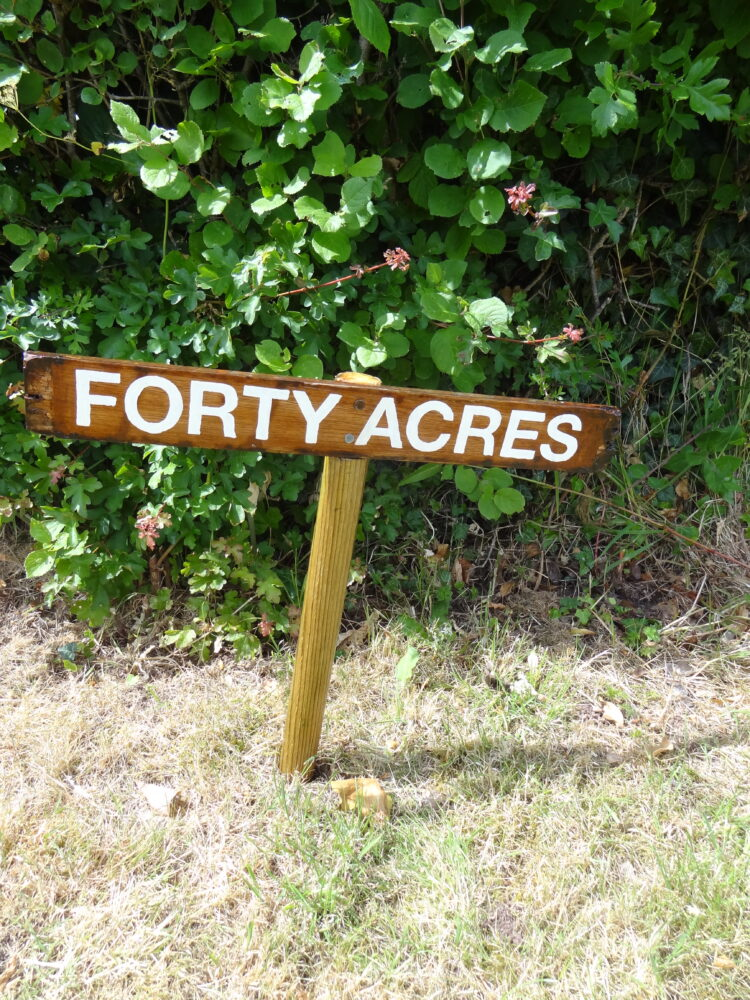 Forty Acres - IT'S A SIGN!